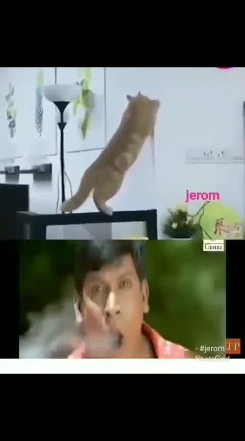 #funnycat  #funnyvideo  #haha_tv
