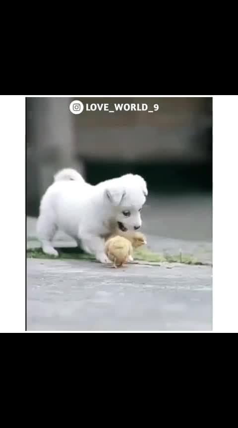 #animallover #dogsofinstagram #jaga143 #nikhil