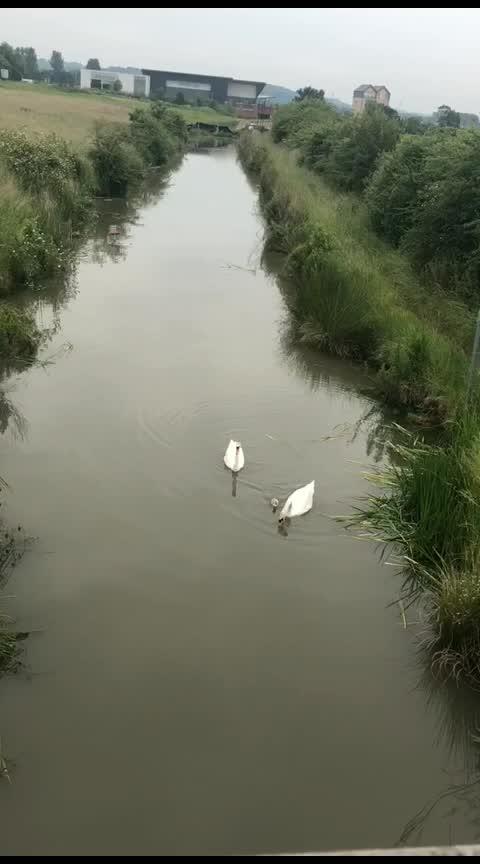 #birdlover #naturelover #nature #swindon