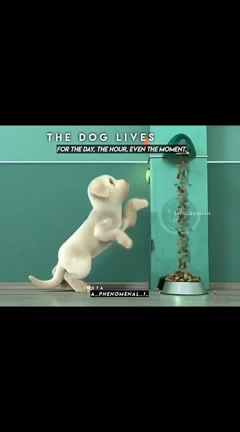 the dog #petlove  #doglover #dog #bowaddict