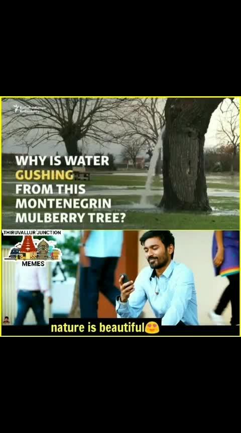 #nature #tree_magic
