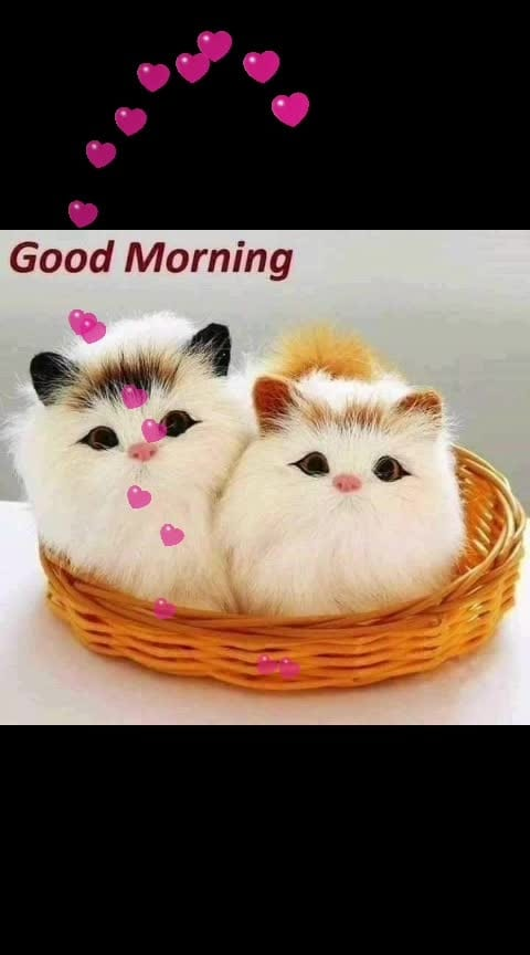 Have a cute morning! #dailywisheschannel #dailywishes #cuteness-overloaded #goodmorning #cats #roposodailywishes #roposo-dailywishes