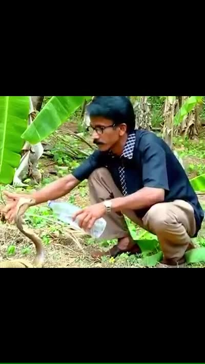 Forest officer offering water to a thirsty cobra. 🐍Haven't seen anything like this before.  Terrific action, superb clip!
