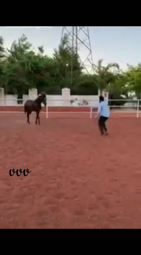 #Horse tho       training in..     #RR movie 🤩😍😘