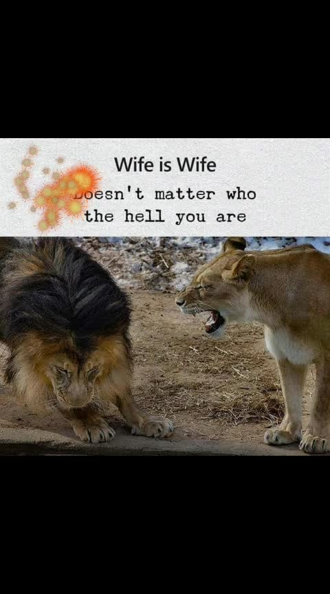wife is wife