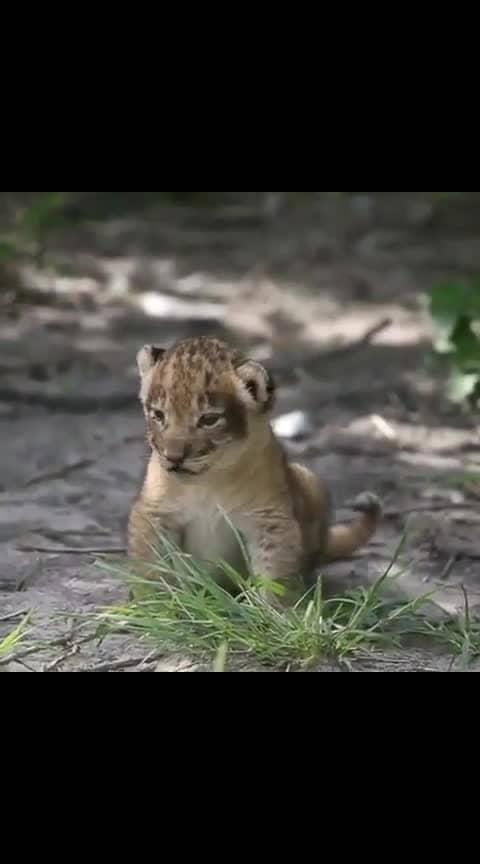cuteness overload 😍😍😍#lionsclub