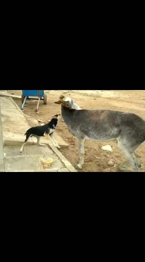 DONKEY & DOG #animal #animals #donkey #donkeys #donkeyrun #donkeysarselounge #dog #dogs #dogs_of_instagram