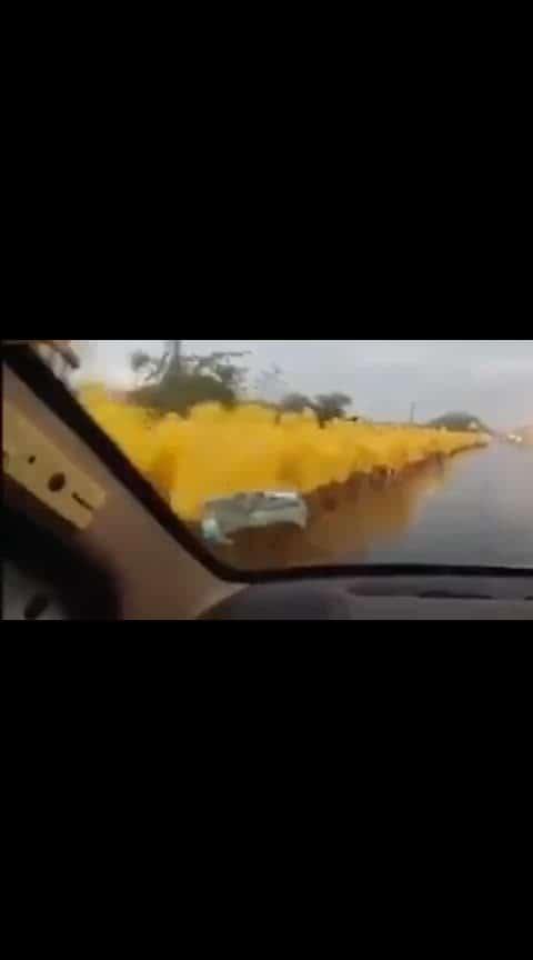 #palkhi in rain... raincoats
