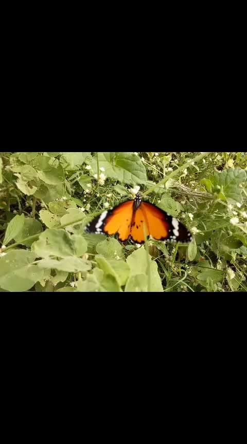 #nature_shooters #maduraikaran #love----love----love