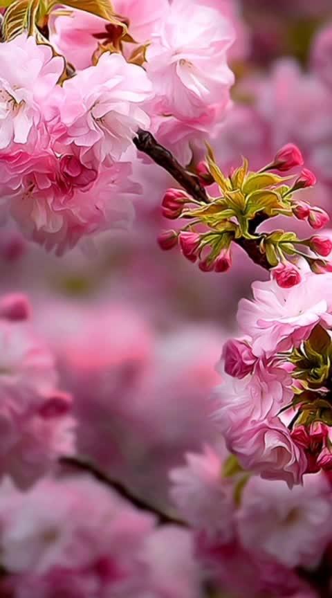 welcome  #beats #roposo #shubhkamnayein #mankibaat #foryou #happy #floraldecor #ropo-style #jaibholenath