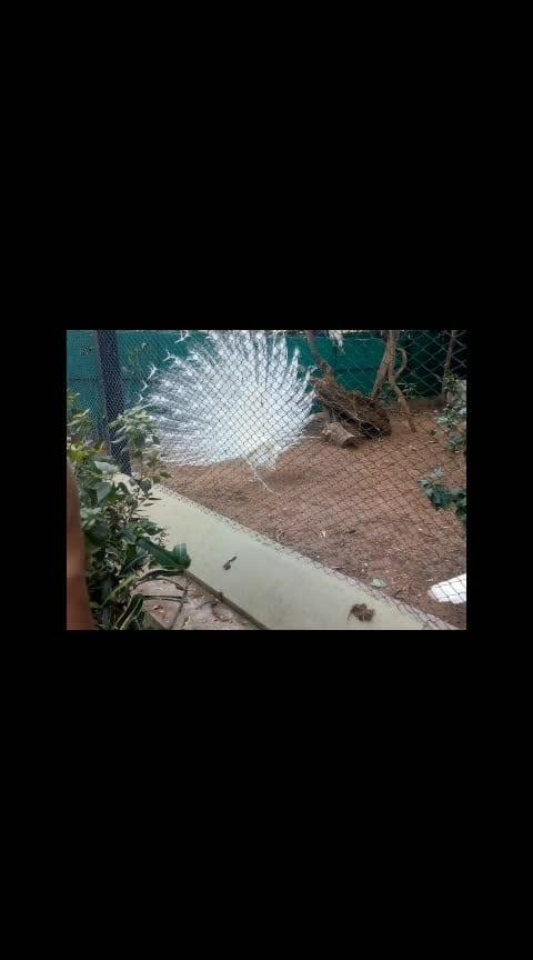 #whitepeacock #roposo-dance #roposo-wow #roposo-trending #roposo-music #roposo-beats #roposo-rising-star-rapsong-roposo #roposostyle