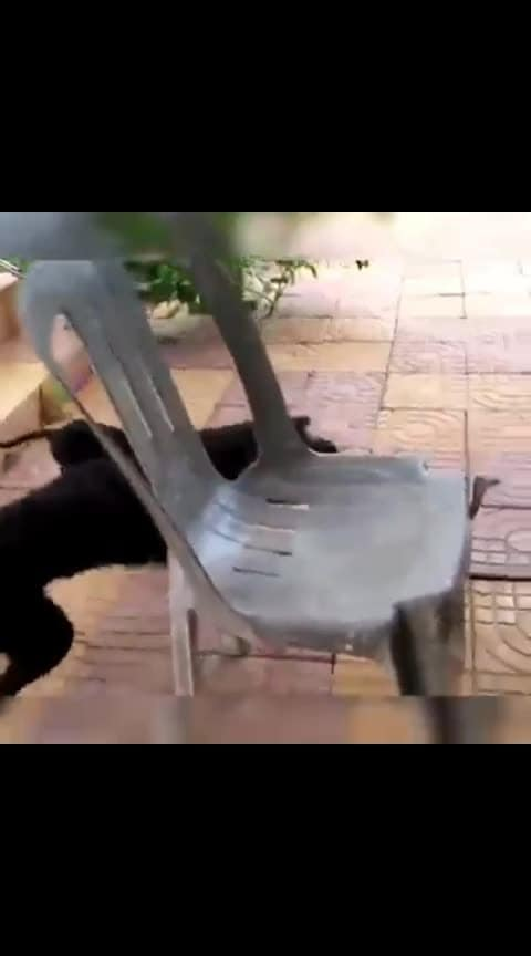 Remember my dog Tommyeee. ... Black dog....,