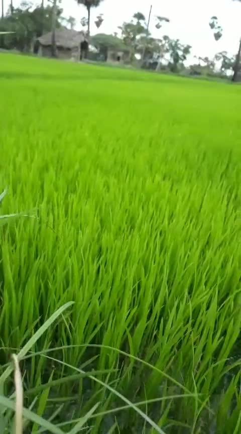 Greenery everywhere