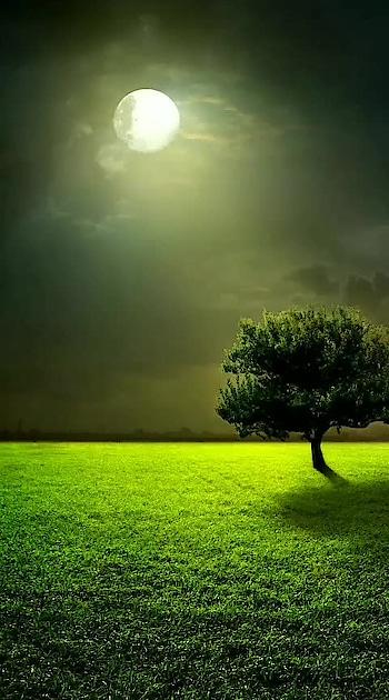 #peace #peaceful #green #nature #nature_brilliance