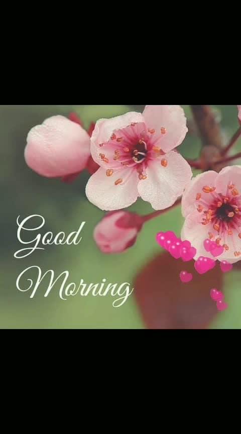 Good Morning  #dailywishes  #goodmorning #flowerslovers #rainyday