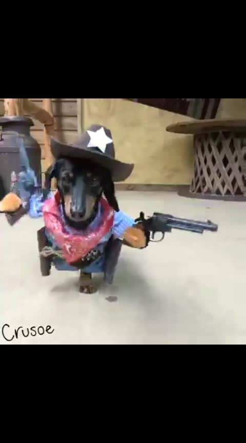 #viralvideo  #dogstagram  👌👌👌👌👌