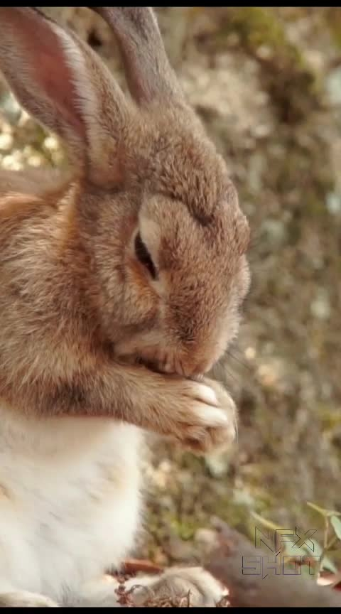 Amazing Facts about Rabbits. Rabbit facts,. #fact  #facts  #rabbit