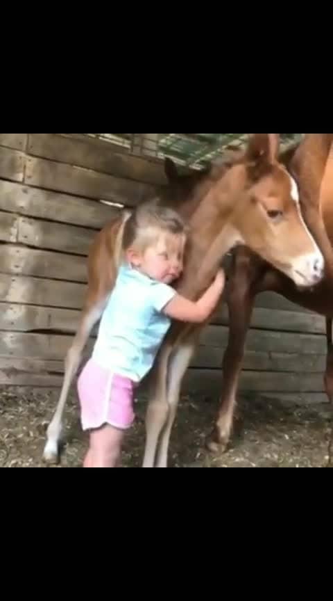 #cute-baby #horse