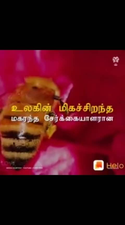Don't kill the useful honey inset