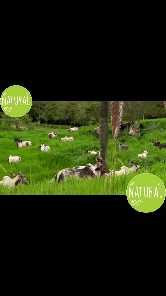 #natural #natural