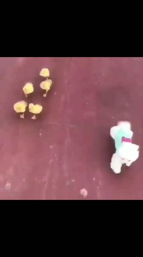 #funnydog  #funny_video  #wow_tv