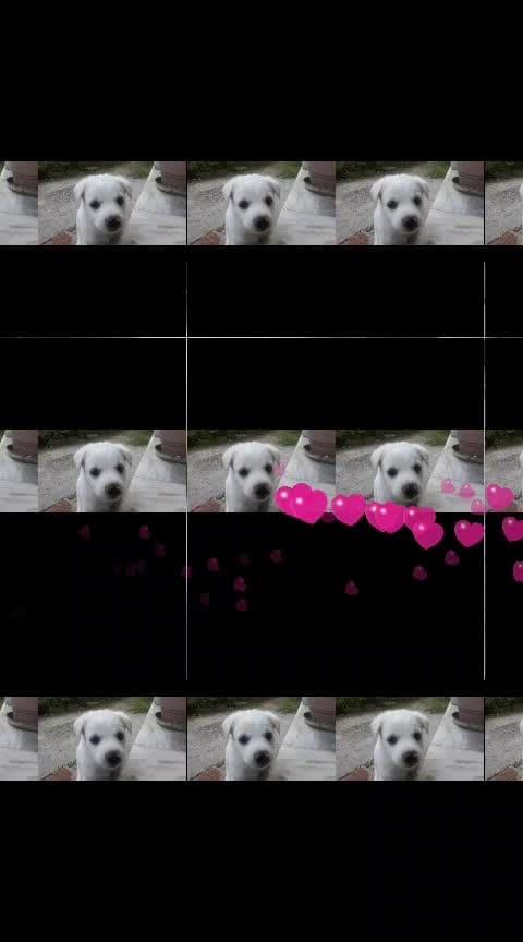 💛💜💚❤️💓💔💖💙💗💖❤️🖤💝💞💙💖💔💚💚💔💝  #dogsofinstagram #dogoftheday