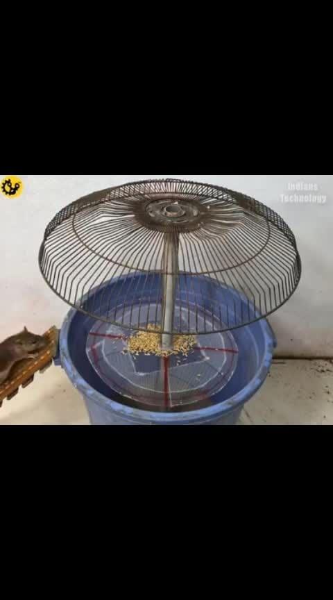 RAT CATCHING
