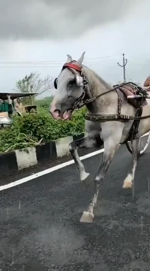 #stunt  #horsepower