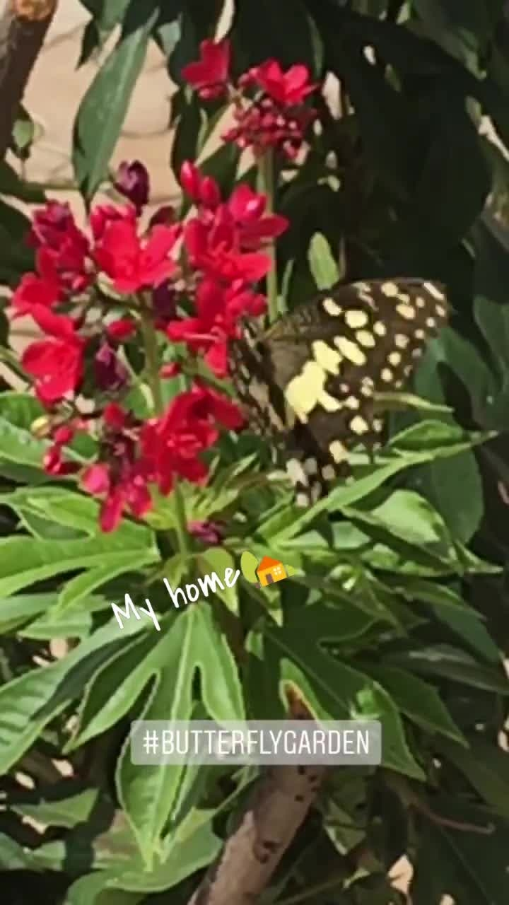 😍#butterfly ##home #myhome