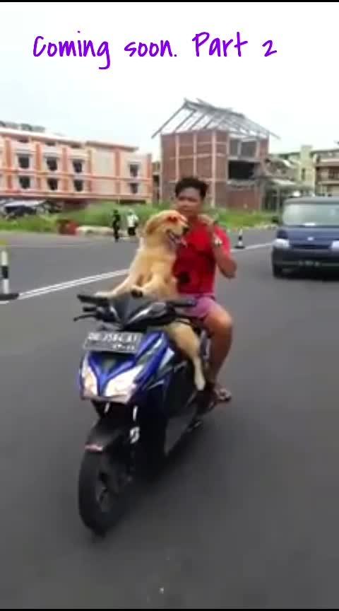 Dog Driving #driving #dog #dogs #dogsofinstagram #dogstyle #haha #haha-tv #roposo-haha #haha-funny #haha-fuuny-video #meme #roposo-meme #jokes #joke #mumbai #hot-look #animals