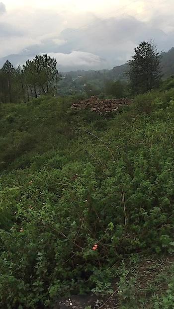 हमारी कुटियाँ के आसपास का प्राकृतिक मनोहारी छटा #nature #hillstation #greenworld #healthyenvironment #happylife #spiritual #place #digitalbaba #swamiramshankar