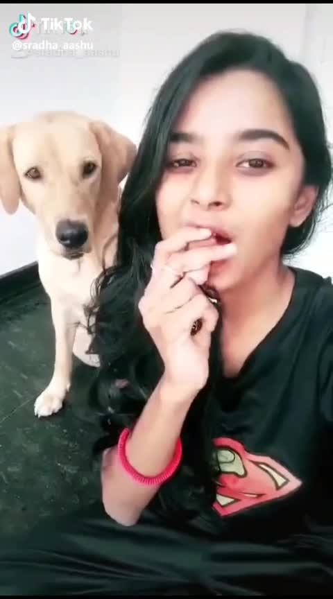 pet lover dogs lover