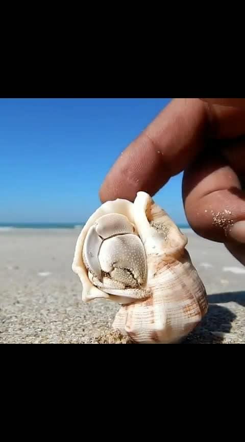 #sea shell
