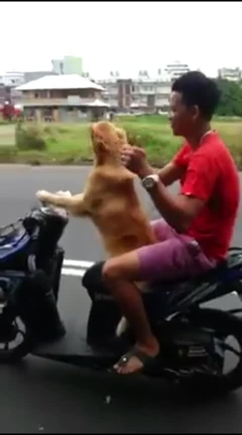 Dog Driving Part 3 #driving #drive #dog #dogs #dogs_of_instagram #animal #animals #jokes #joke #joking #non-veg-jokes #meme #roposo-meme #memes #adult-meme #haha #haha-tv #roposo-haha #haha-funny #haha-fuuny-video