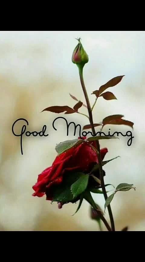 #good----morning #goodmorning-roposo #roposo-good #roposo-good #goodnight-wishes