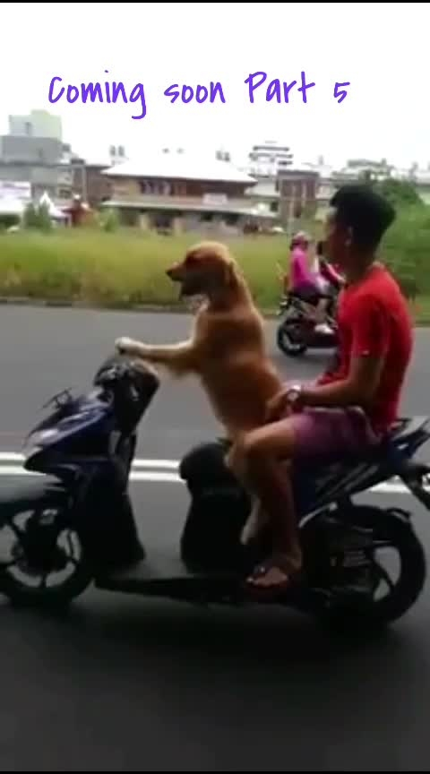 Dog Driving Part 5 #driving #drive #drives #roposo-haha #haha #haha-tv #haha-funny #haha-fuuny-video #hahafun #hahafunnyvideo #dog #dogs #doglover