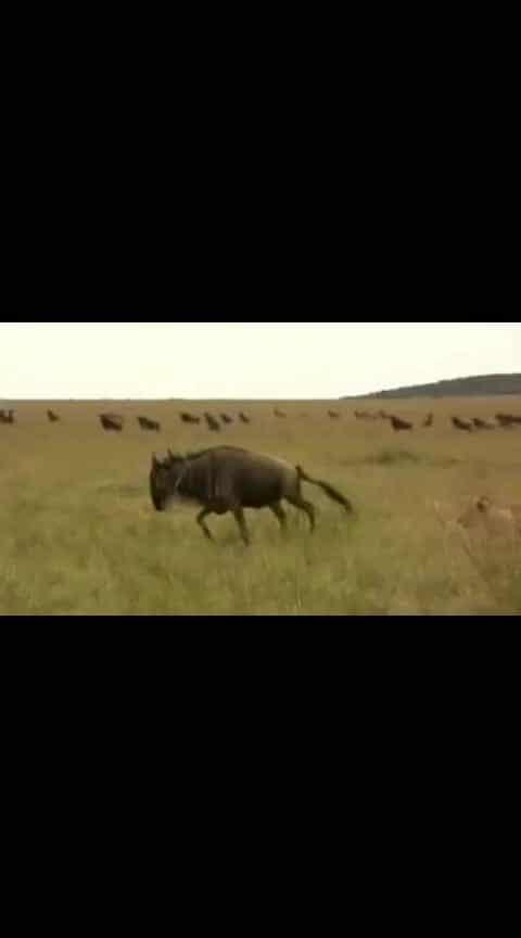 #funny #roposotv #haha-tv #wildlife #very-funny #wildlifesafari