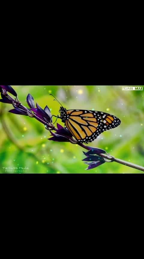 #TejassMulePhotography ❤✌  #whatsappstatusvideo #goodmorningpost #umeshdeshmukhcreation #terafitur #newstatusvideo2019