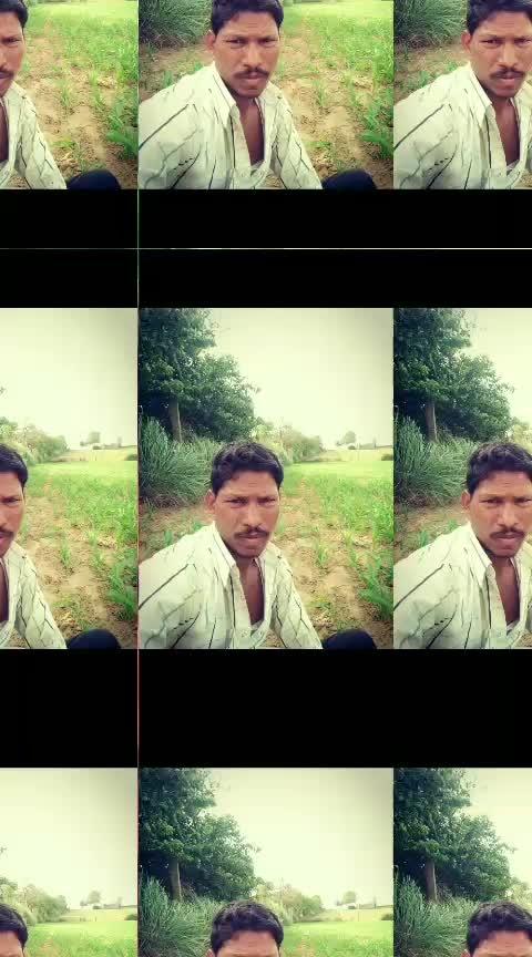 crop bajra
