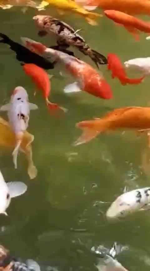 #fish 🗣️🗣️