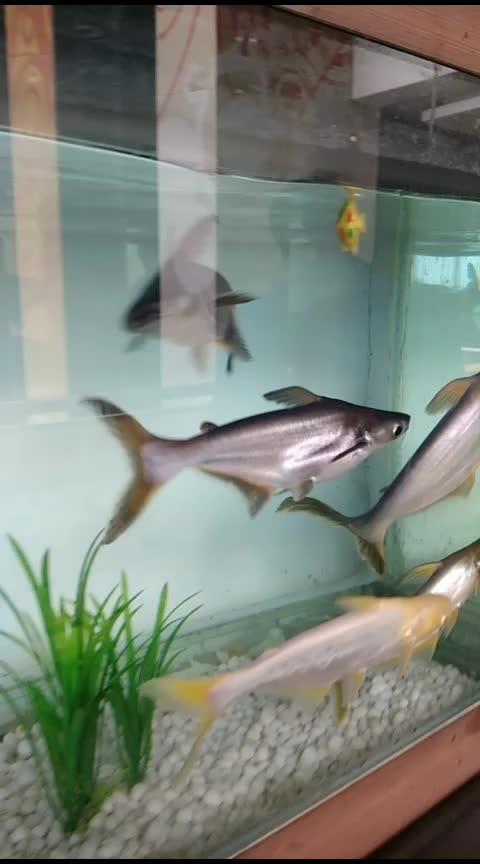 fishAcquarium #Fish #FishAcaurium