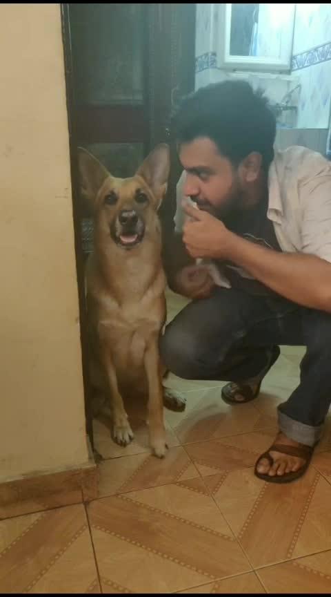 ###brave dog ........😘😘😘