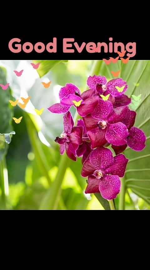 #flowers 🌸💮🏵