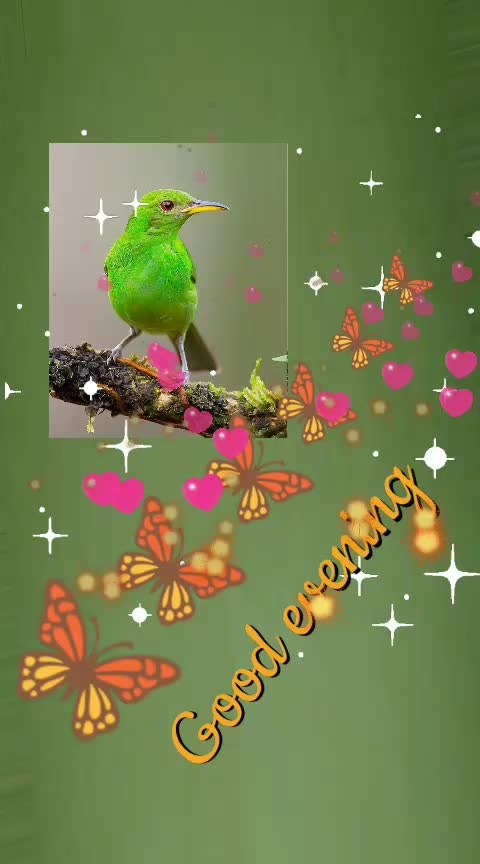 good evening my lovely friend 🌷