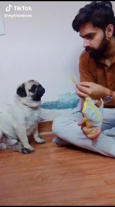 #pet #pets #petlove #petlover #dog #dogs #doglover #doglove #roposo #roposoindia #fun #funny