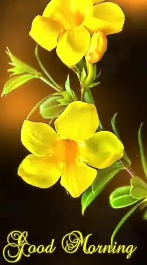 🌞#ᎶᎾᎾᎠ 🌄 mᎾᏒᏁᎥᏁᎶ🌞...  @aj__21 @piyushprajapati82 #roposo-good #good----morning #good-looking#good-morning-roposo-friends  #good--morning #good----morning----#good---morning  #good----morning_______ #good-morning-roposo-friends #good-afternoon-friends #good-morning-guys #good-time #good-evening #bits-of-good