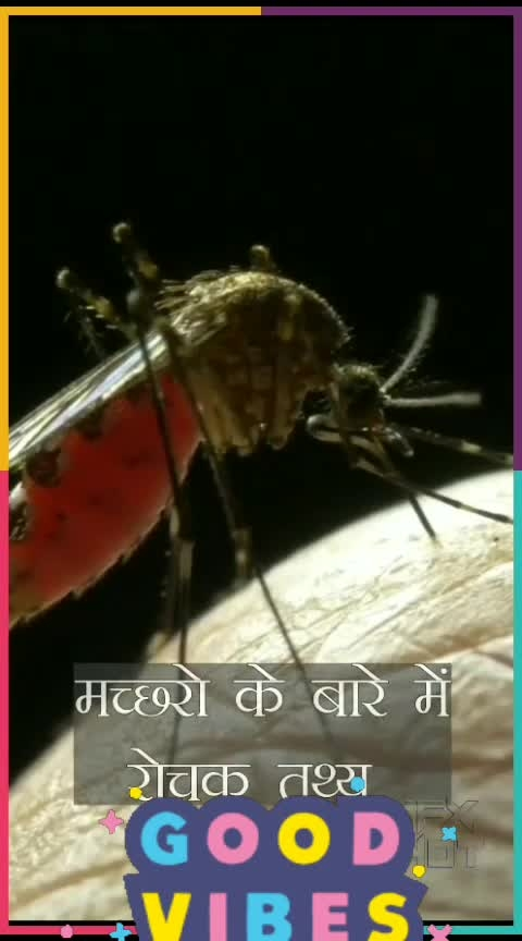 #amazing_facts_of_mosquitoes #funfacts