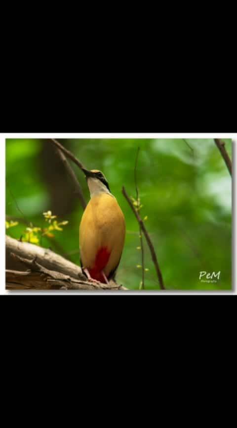 #birds #birdphotography #birdlover