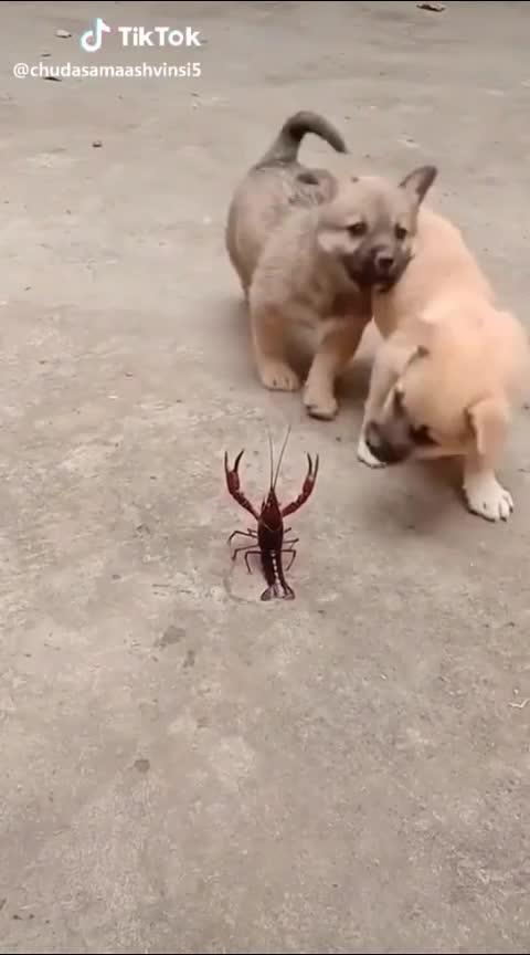 dog and kaita
