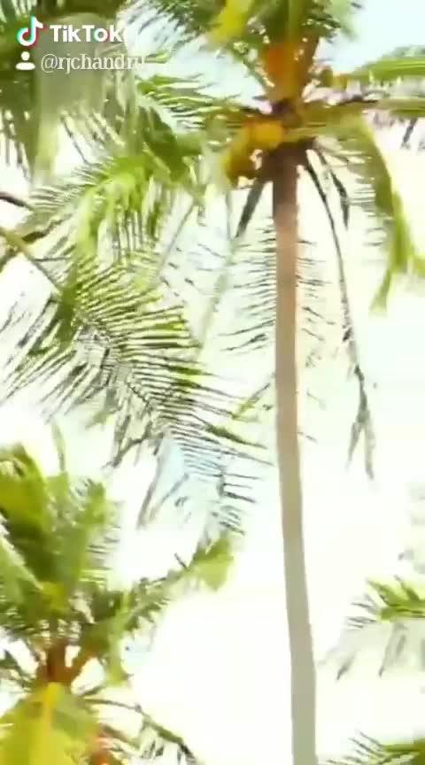 #roposo-tamil #tamiltiktok #tamilanda #thalapthy-vijay #thalapathy-fan @rjchandru 😍😍